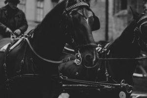 Horse Carriage Ride Vienna   Bikinis & Passports