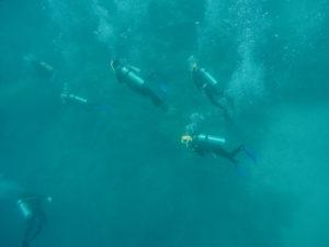 Poseidon Cruises: Snorkel The Great Barrier Reef, Australia | Bikinis & Passports
