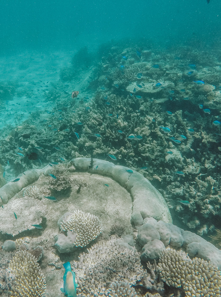 Poseidon Cruises: Snorkel The Great Barrier Reef, Australia | Bikinis & Passports